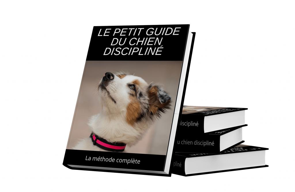 Le guide du chien discipliné